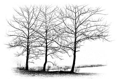 Trees At Water's Edge Poster by Tom Mc Nemar