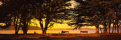 Trees In A Field, Crissy Field, San Poster by Panoramic Images