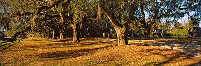 Trees In A Garden, Boone Hall Poster by Panoramic Images