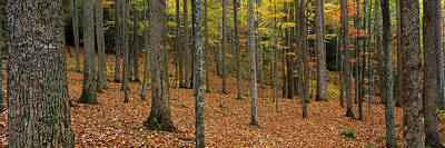 Trees In Forest, Smoky Mountains Poster by Panoramic Images