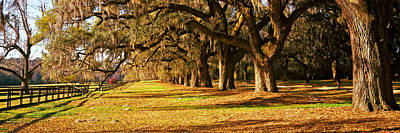 Trees In Garden, Boone Hall Plantation Poster by Panoramic Images