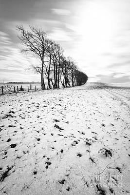Trees In Snow Scotland II Poster by John Farnan