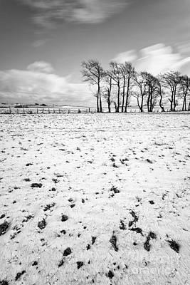 Trees In Snow Scotland IIi Poster by John Farnan