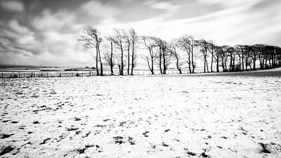 Trees In Snow Scotland Iv Poster by John Farnan