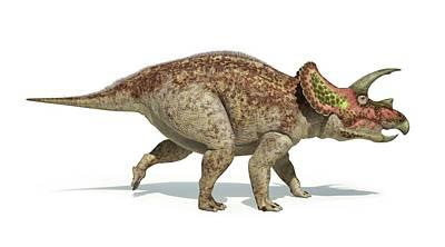 Triceratops Dinosaur Poster by Leonello Calvetti