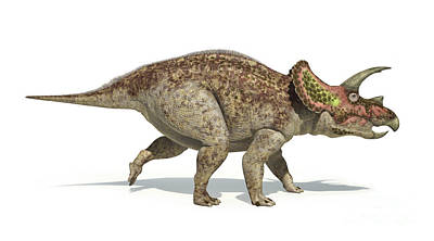 Triceratops Dinosaur On White Poster by Leonello Calvetti