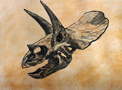 Triceratops Skull Poster by Harm  Plat