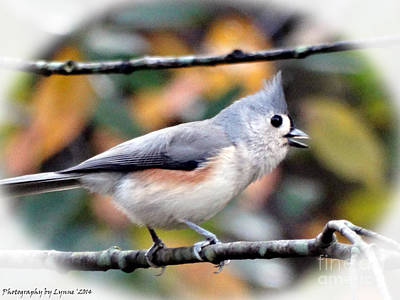 Tufted Titmouse 2 Poster by Gena Weiser