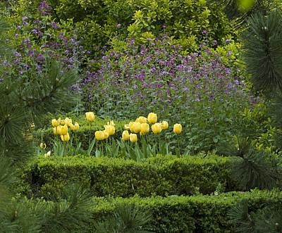 Tulip Garden Poster by Frank Tschakert
