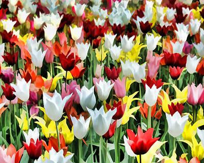 Tulips In Field Poster by Flo Karp
