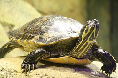 Turtle Poster by Liz Bills