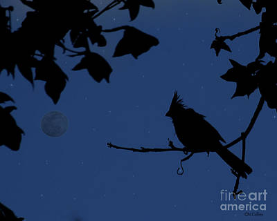 Twilight Sillouette Of Cardinal Poster by Amanda Collins