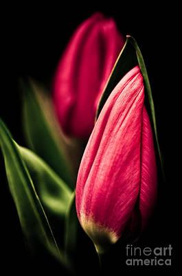 Twin Tulips Poster by Venetta Archer
