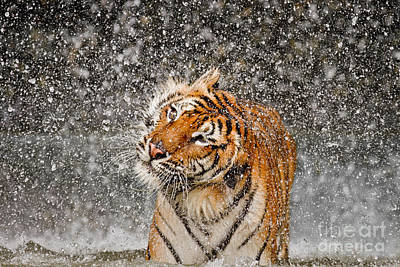 Twist And Shake Poster by Ashley Vincent