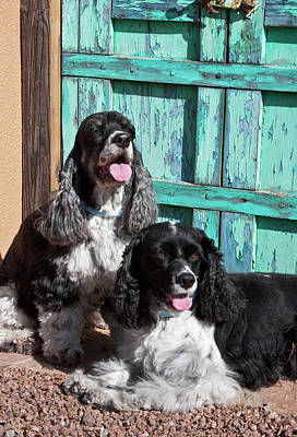 Two Cocker Spaniels In Front Of An Old Poster by Zandria Muench Beraldo