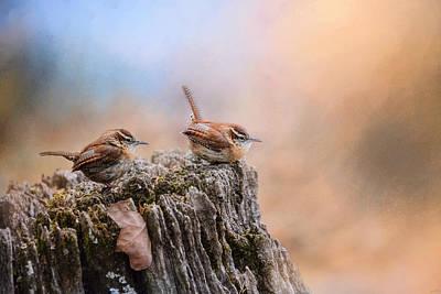 Two Little Wrens Poster by Jai Johnson