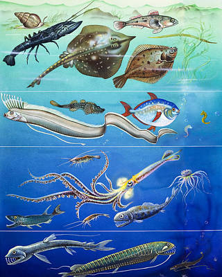 Underwater Creatures Montage Poster by English School