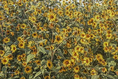 Untamed Sunflowers Poster by Jeff Swanson