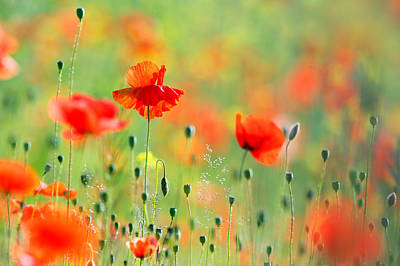 Untited Colours Of Summer  Poster by Roeselien Raimond