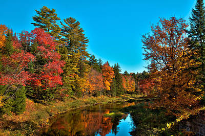 Upper Branch Of The Moose River In Autumn Poster by David Patterson
