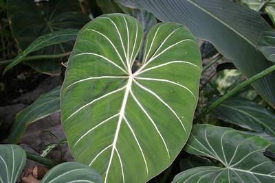 Us Botanic Garden - 121211 Poster by DC Photographer