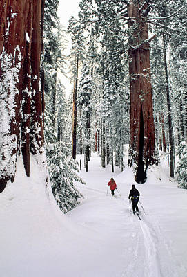 Usa, California, Cross Country Skiing Poster by Gerry Reynolds