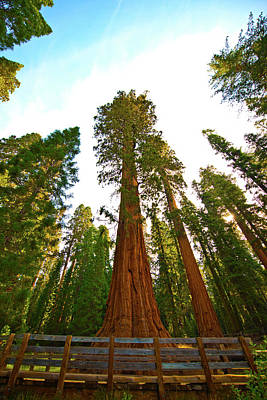 Usa, California, Sequoia, Kings Canyon Poster by Bernard Friel