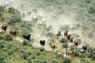 Usa, Washington, Malaga, Running Horses Poster by Jaynes Gallery