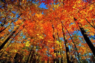 Usa, West Lafayette, Indiana, Trees Poster by Rona Schwarz