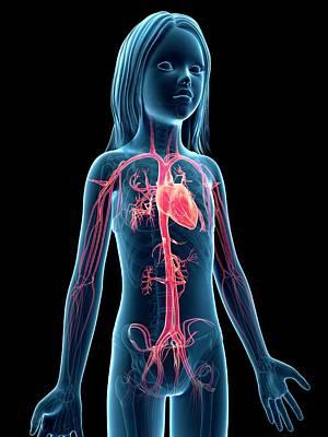 Vascular System Of Girl Poster by Sebastian Kaulitzki