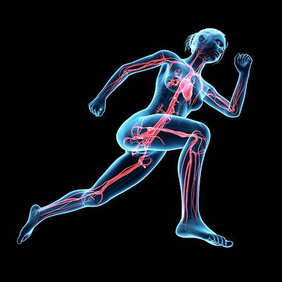 Vascular System Of Jogger Poster by Sebastian Kaulitzki