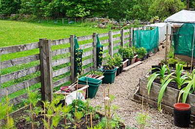 Vegetable Garden Poster by Tom Gowanlock