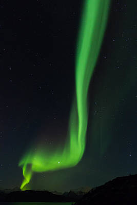 Vertical Ray Of Northern Lights In Norway Poster by Aldona Pivoriene