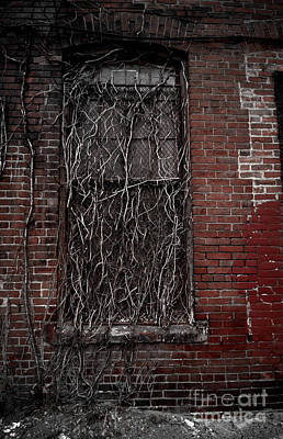 Roots Poster featuring the photograph Vines Of Decay by Amy Cicconi
