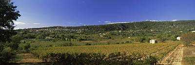 Vineyard At Saint-saturnin-les-apt Poster by Panoramic Images