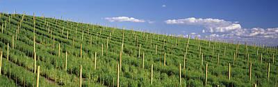 Vineyard, Napa County, California, Usa Poster by Panoramic Images