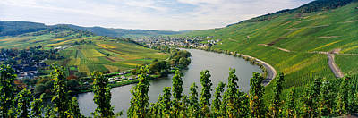 Vineyards Along A River, Moselle River Poster by Panoramic Images