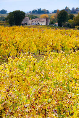 Vineyards In Autumn, Montagne, Gironde Poster by Panoramic Images