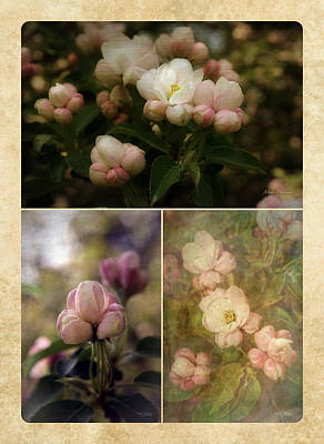 Vintage Apple Blossoms Collage Poster by Mary Machare