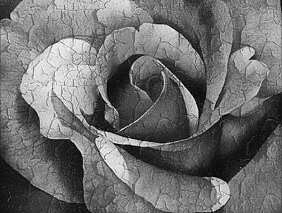 Vintage Cracked Rose Poster by Georgiana Romanovna