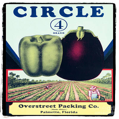 Vintage Florida Food Signs 3 - Circle 4 Brand - Square Poster by Ian Monk