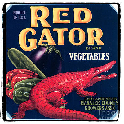 Vintage Florida Food Signs 6 - Red Gator Brand - Square Poster by Ian Monk