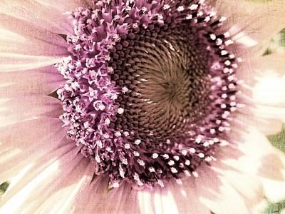 Vintage Sunflower  Poster by Marianna Mills