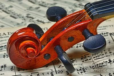 Violin Scroll Up Close Poster by Paul Ward