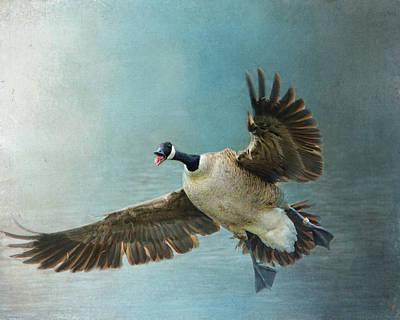 Wait For Me - Wildlife - Goose In Flight Poster by Jai Johnson
