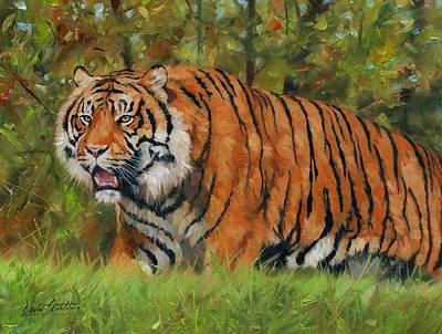 Walk In The Forest. Amur Tiger Poster by David Stribbling