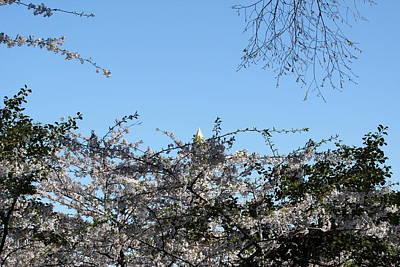 Washington Monument - Cherry Blossoms - Washington Dc - 01132 Poster by DC Photographer