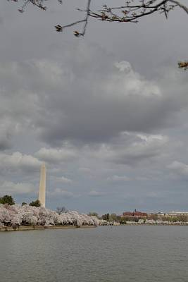 Washington Monument - Cherry Blossoms - Washington Dc - 011333 Poster by DC Photographer