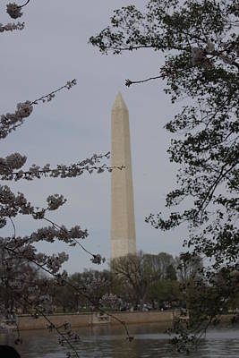 Washington Monument - Cherry Blossoms - Washington Dc - 01138 Poster by DC Photographer