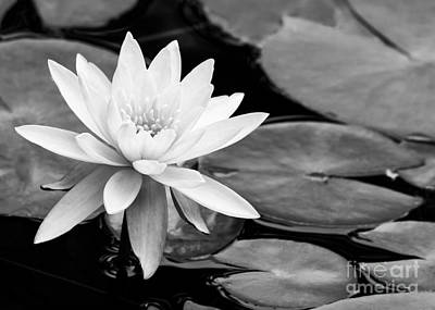 Water Lily In The Lily Pond Poster by Sabrina L Ryan